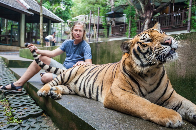 Tiger Kingdom Chiang Mai Places to Visit